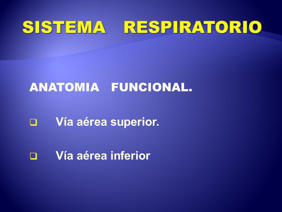 SISTEMA RESPIRATORIO ANATOMIA FUNCIONAL. Vía aérea superior. - ppt ...