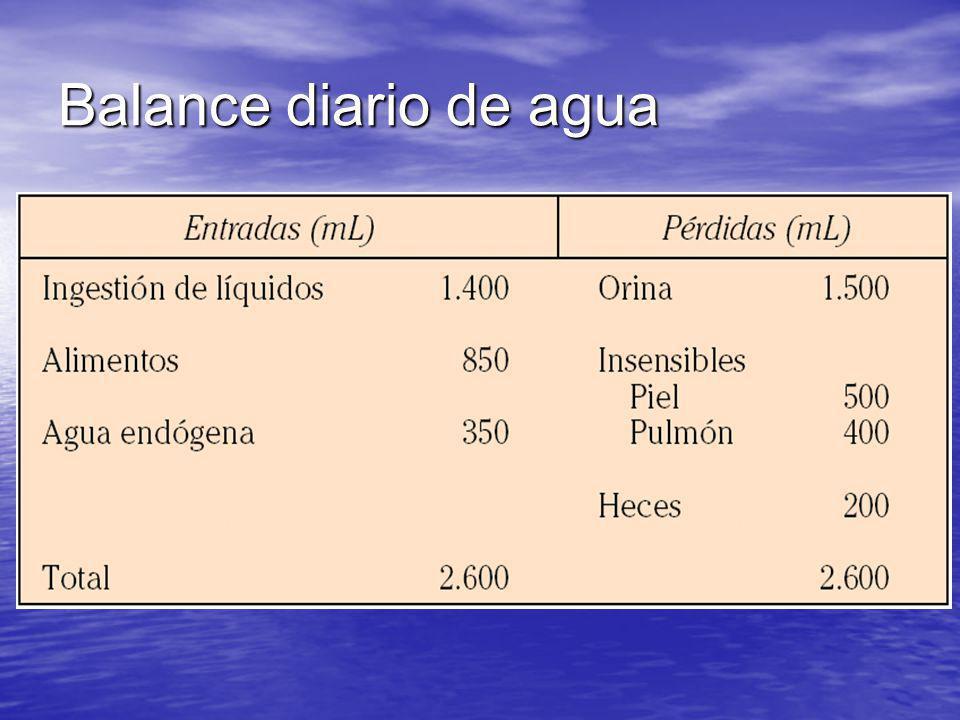 Balance diario de agua