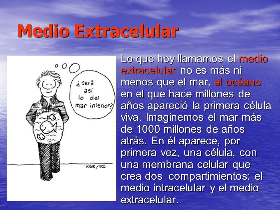 Medio Extracelular