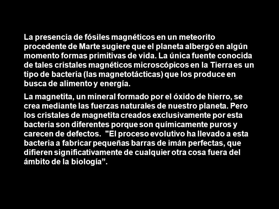 La presencia de fósiles magnéticos en un meteorito procedente de Marte sugiere que el planeta albergó en algún momento formas primitivas de vida. La única fuente conocida de tales cristales magnéticos microscópicos en la Tierra es un tipo de bacteria (las magnetotácticas) que los produce en busca de alimento y energía.