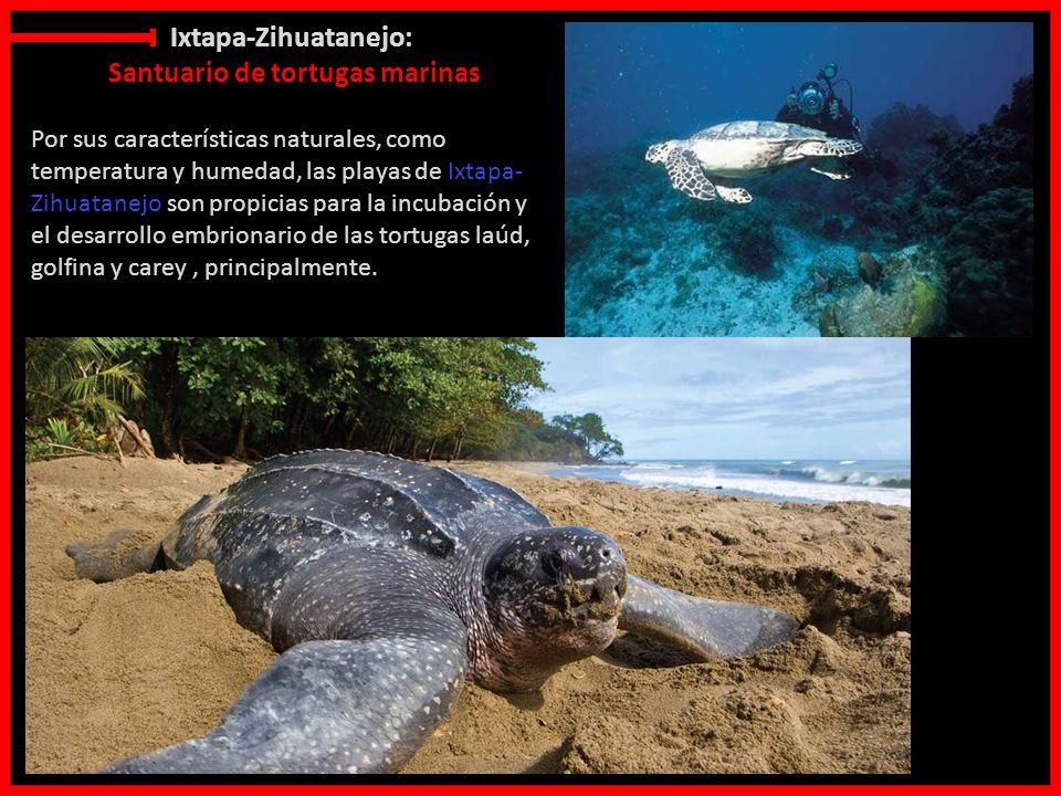 Punta cana video oficial many malon y kiubbah malon - 5 4