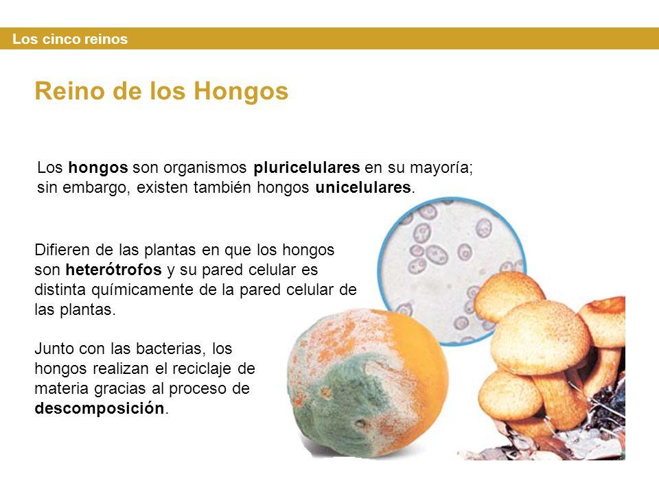 Los cinco reinos Reino de los Hongos. Los hongos son organismos pluricelulares en su mayoría; sin embargo, existen también hongos unicelulares.