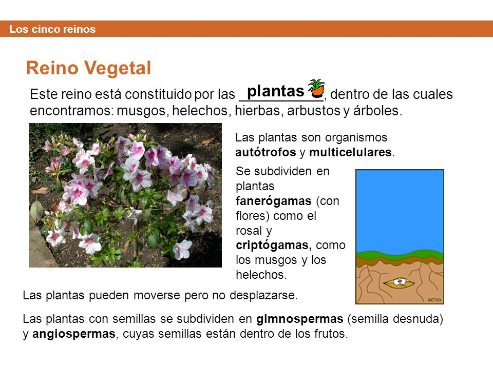 Los cinco reinos Reino Vegetal. plantas.