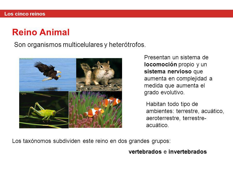 Reino Animal Son organismos multicelulares y heterótrofos.