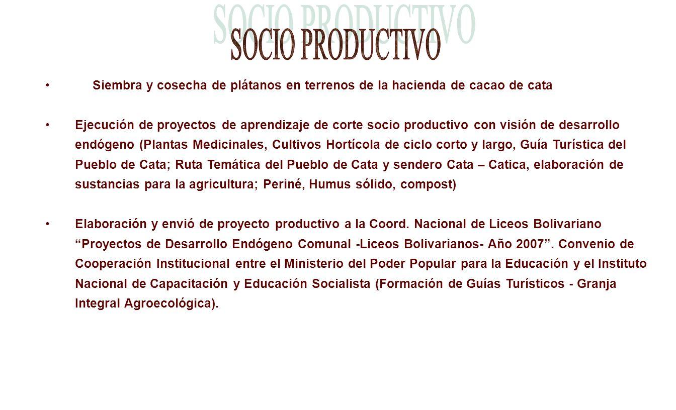 SOCIO PRODUCTIVO Siembra y cosecha de plátanos en terrenos de la hacienda de cacao de cata.