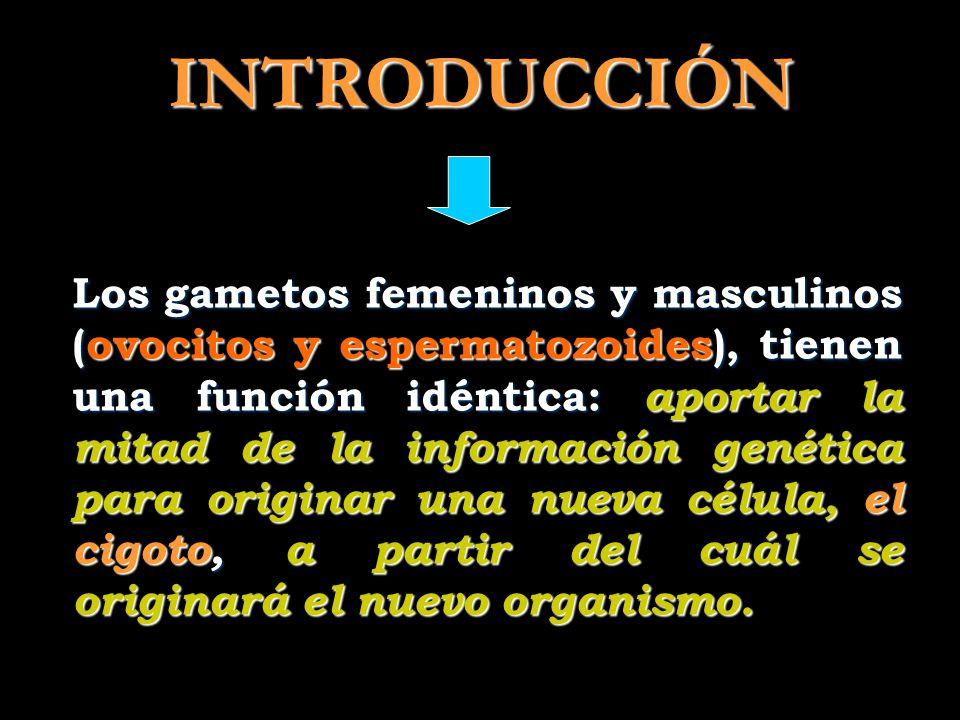 Informaciones para espermatozoides