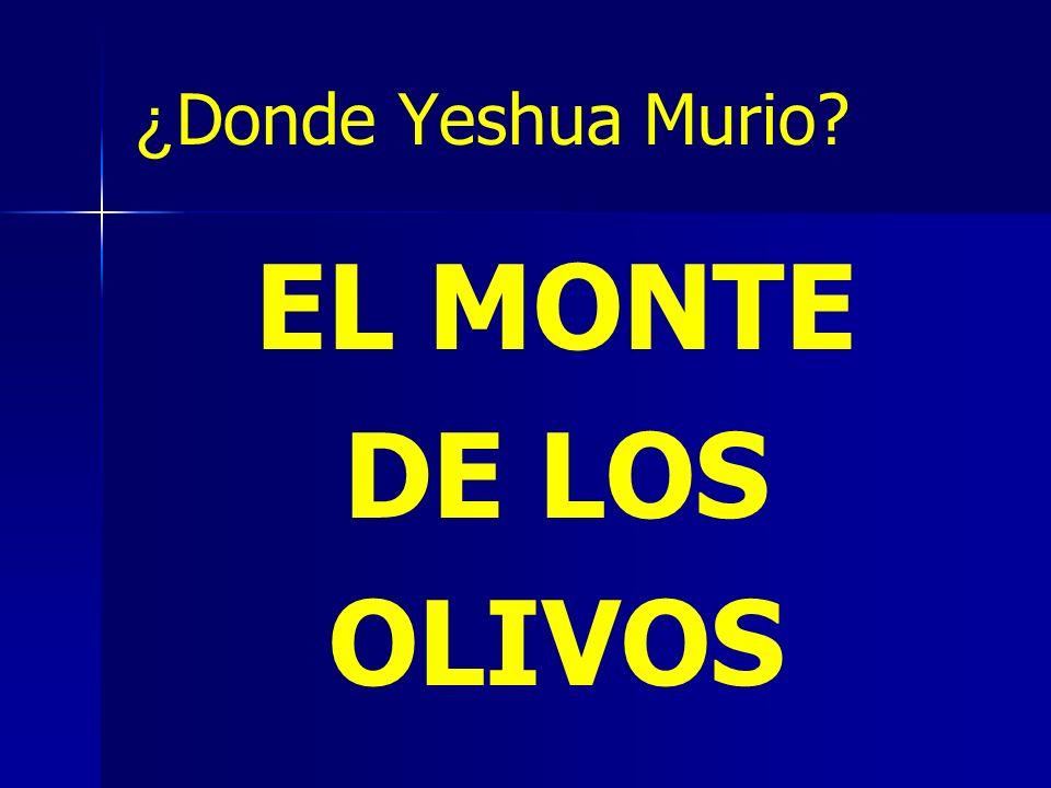 ¿Donde Yeshua Murio EL MONTE DE LOS OLIVOS