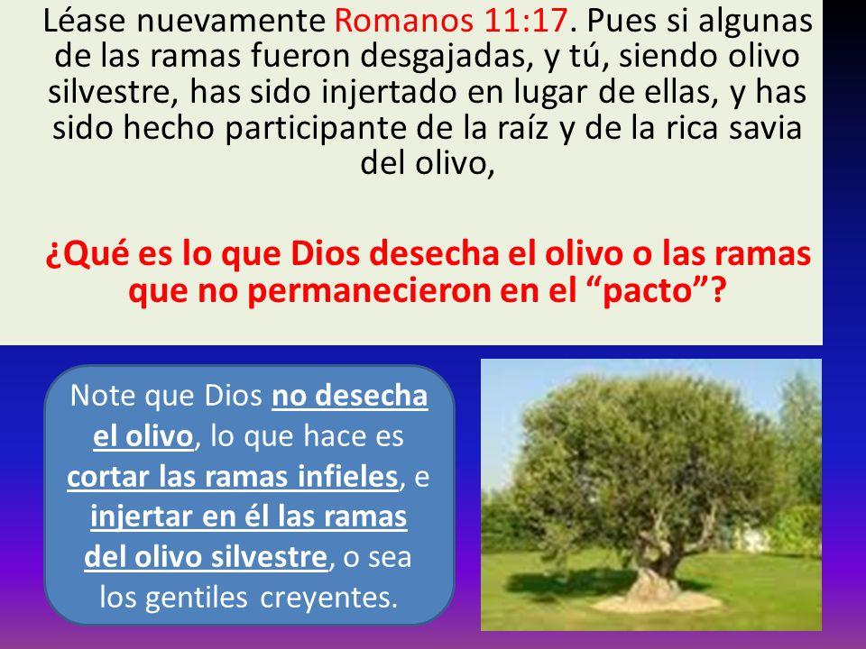 Léase nuevamente Romanos 11:17