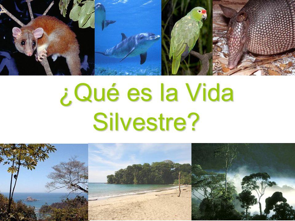 ¿Qué es la Vida Silvestre