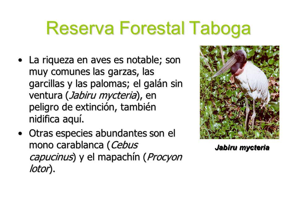 Reserva Forestal Taboga