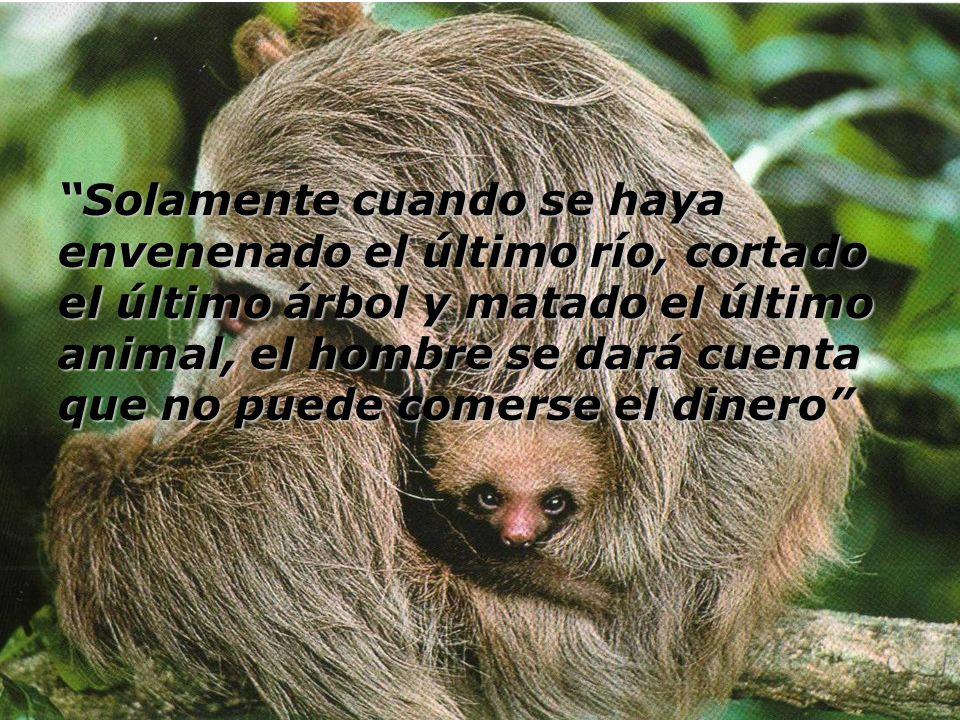 Solamente cuando se haya envenenado el último río, cortado el último árbol y matado el último animal, el hombre se dará cuenta que no puede comerse el dinero