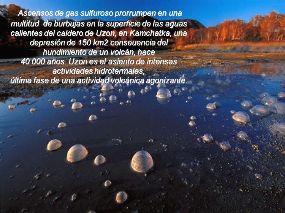 Ascensos de gas sulfuroso prorrumpen en una multitud de burbujas en la superficie de las aguas calientes del caldero de Uzon, en Kamchatka, una depresión de 150 km2 conseuencia del hundimiento de un volcán, hace