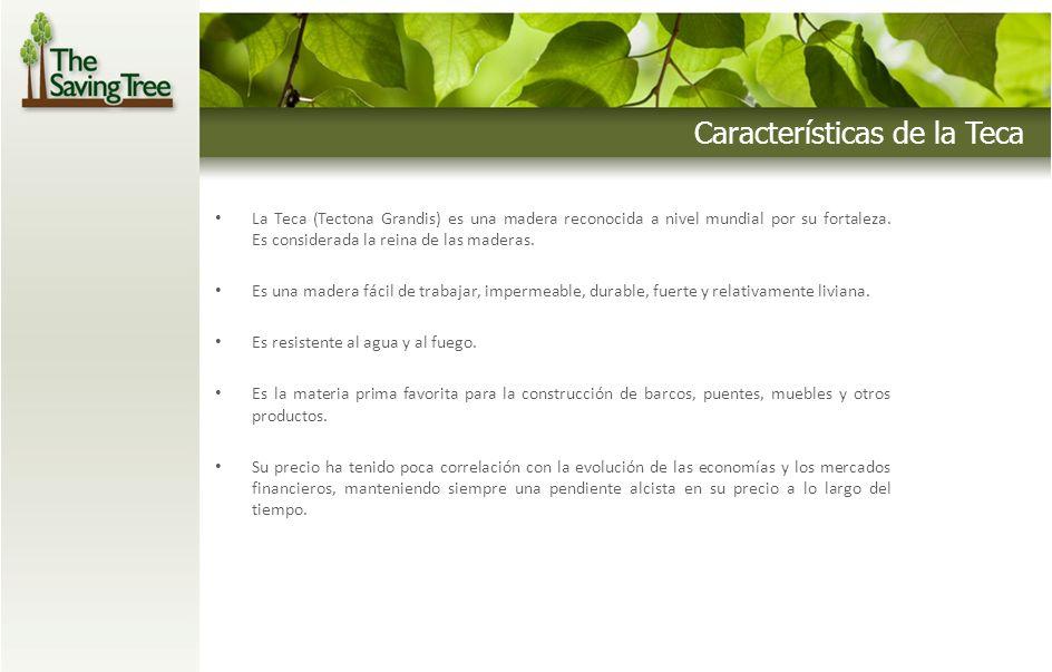 Características de la Teca