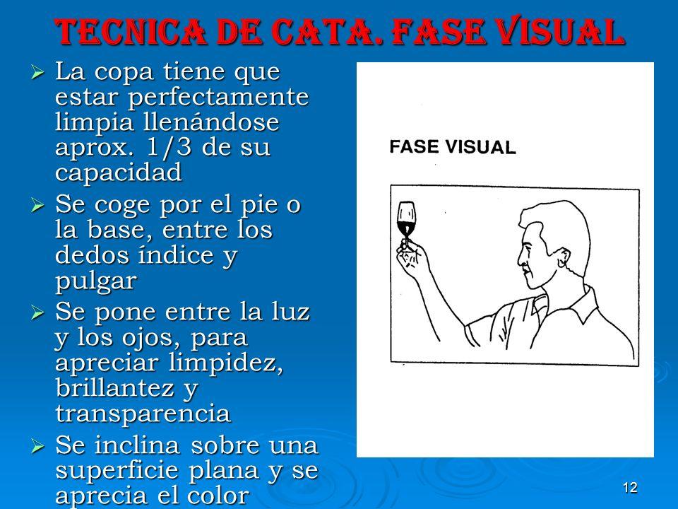 TECNICA DE CATA. FASE VISUAL