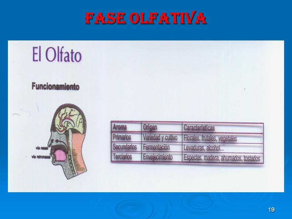 FASE OLFATIVA