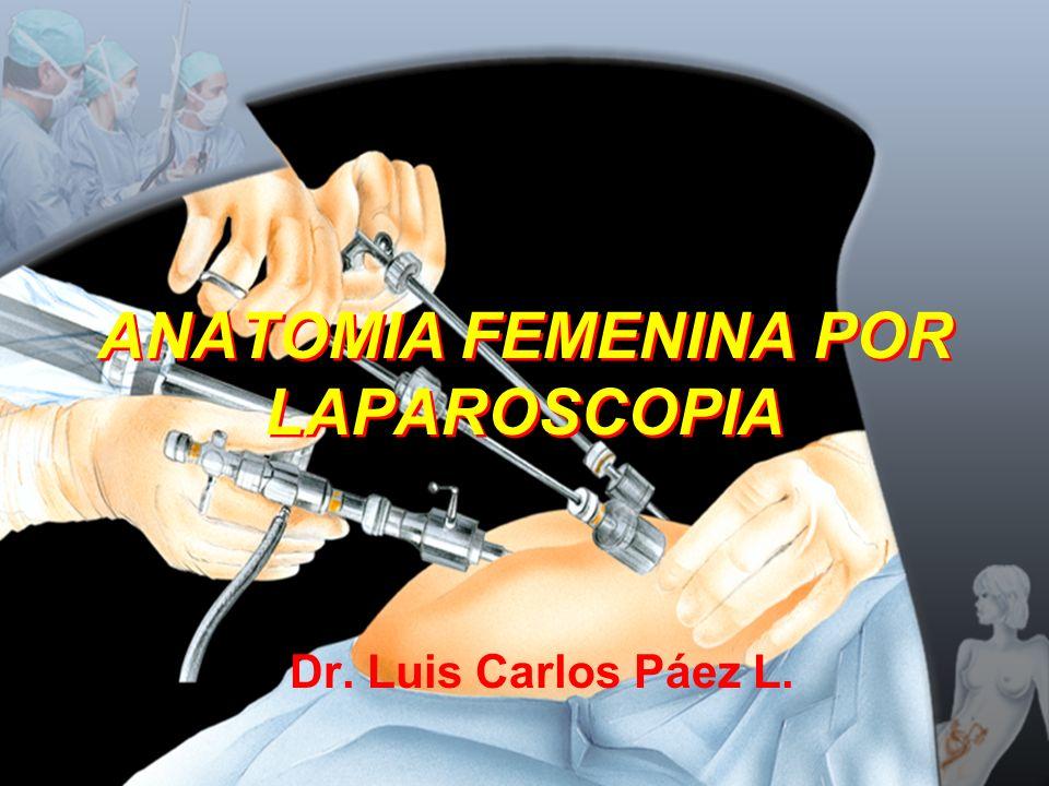 ANATOMIA FEMENINA POR LAPAROSCOPIA
