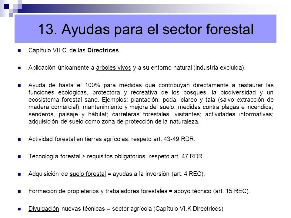 13. Ayudas para el sector forestal