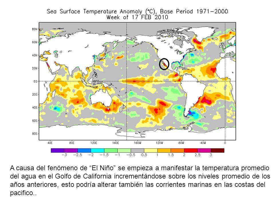 A causa del fenómeno de El Niño se empieza a manifestar la temperatura promedio del agua en el Golfo de California incrementándose sobre los niveles promedio de los años anteriores, esto podría alterar también las corrientes marinas en las costas del pacifico..