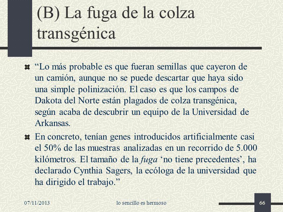 (B) La fuga de la colza transgénica