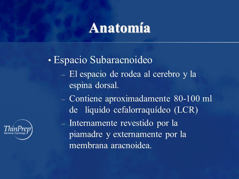 Anatomía Espacio Subaracnoideo