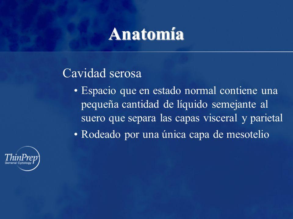 Anatomía Cavidad serosa