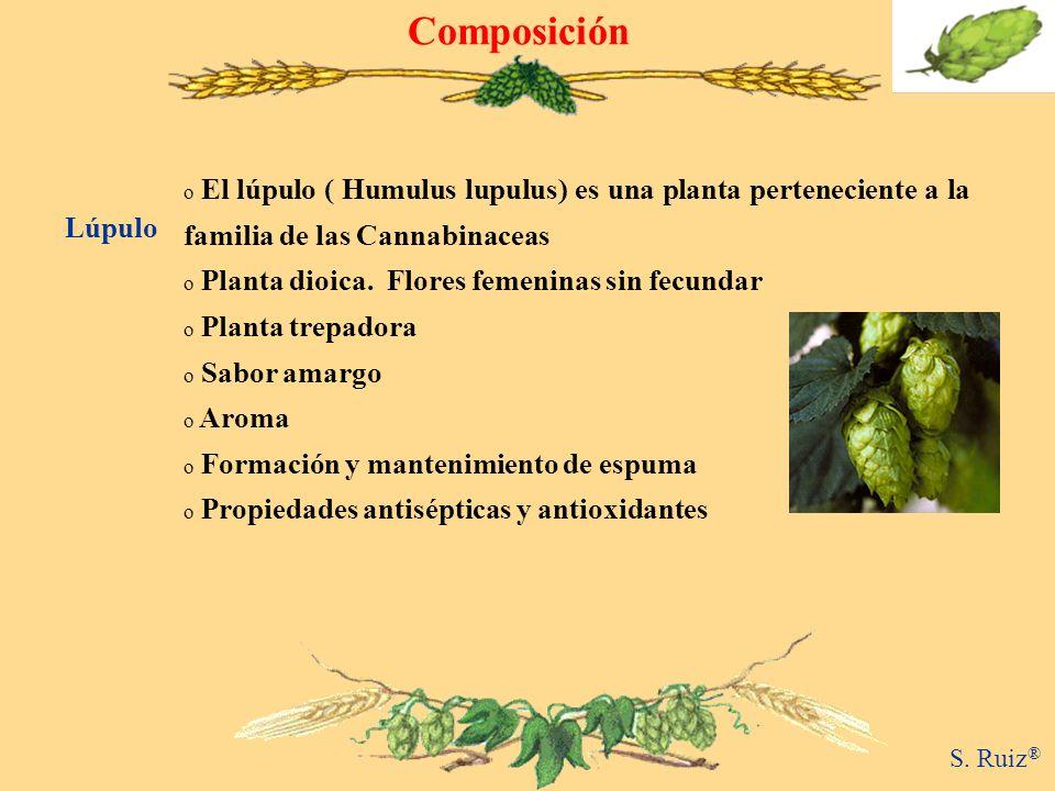 Composición El lúpulo ( Humulus lupulus) es una planta perteneciente a la familia de las Cannabinaceas.