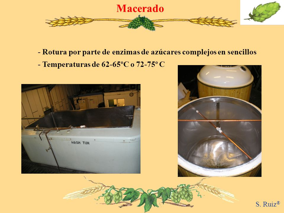 Macerado- Rotura por parte de enzimas de azúcares complejos en sencillos. - Temperaturas de 62-65ºC o 72-75º C.