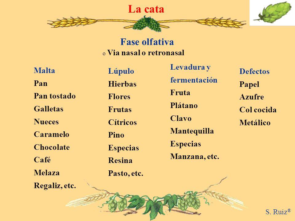 La cata Fase olfativa Via nasal o retronasal Levadura y Malta Lúpulo