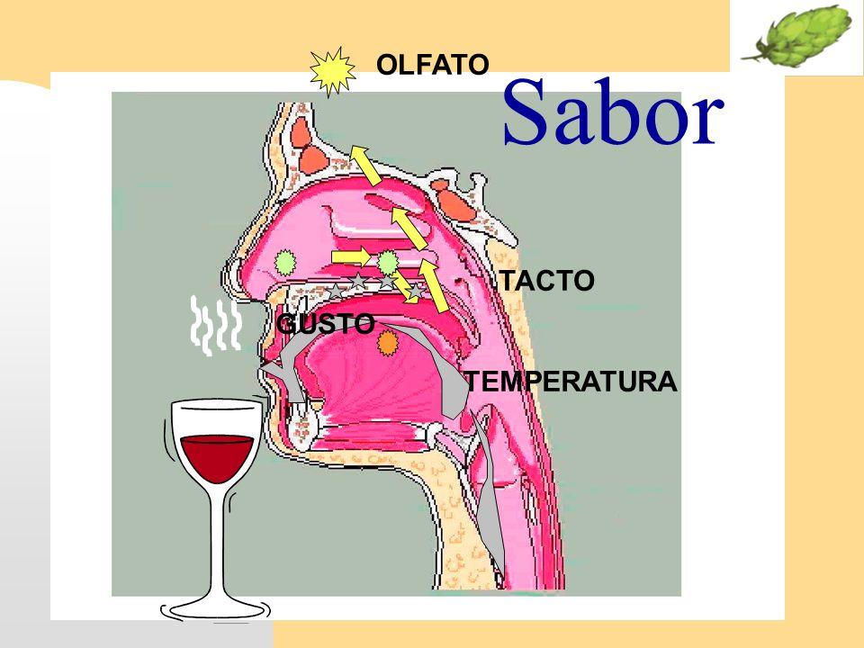 OLFATO Sabor TACTO GUSTO TEMPERATURA