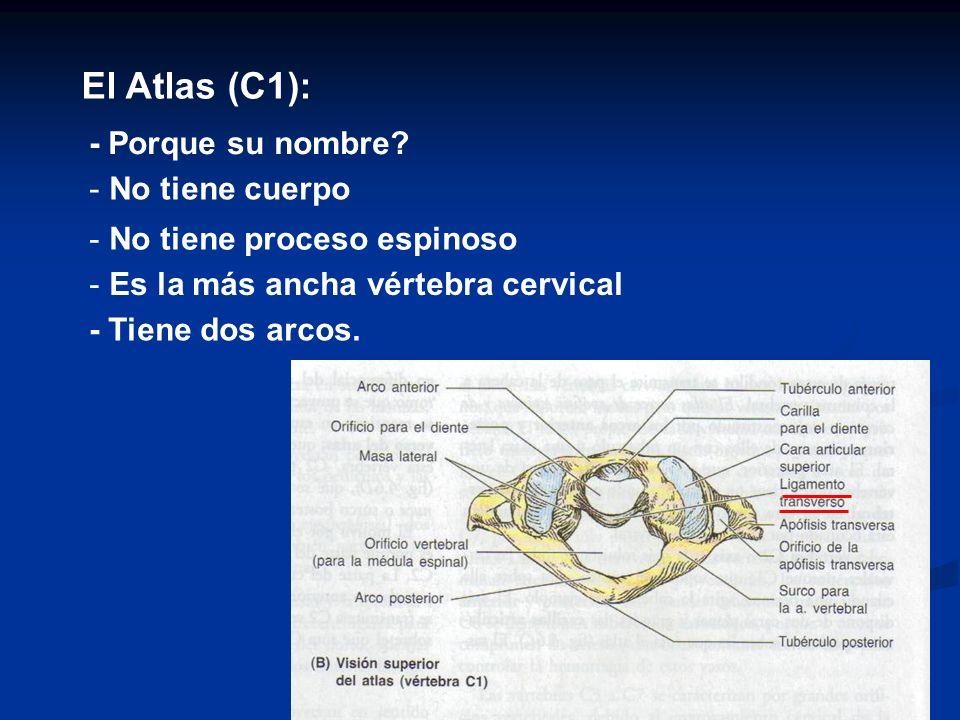 El Atlas (C1): - Porque su nombre No tiene cuerpo