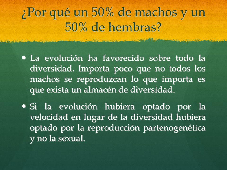¿Por qué un 50% de machos y un 50% de hembras