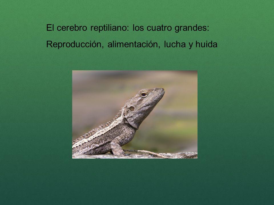 El cerebro reptiliano: los cuatro grandes: