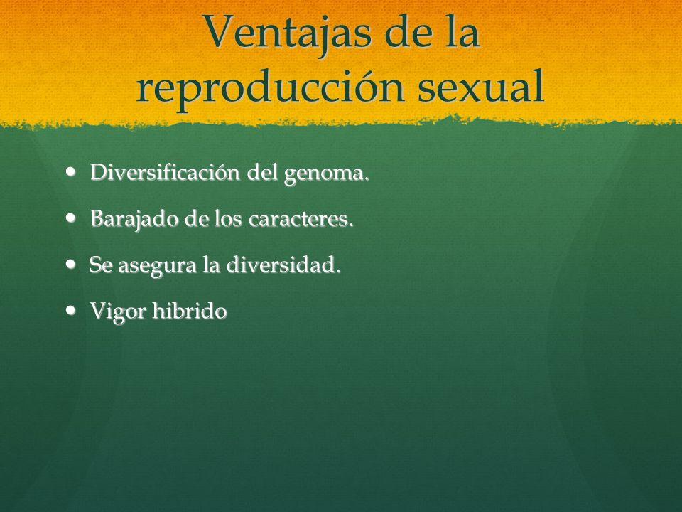Ventajas de la reproducción sexual