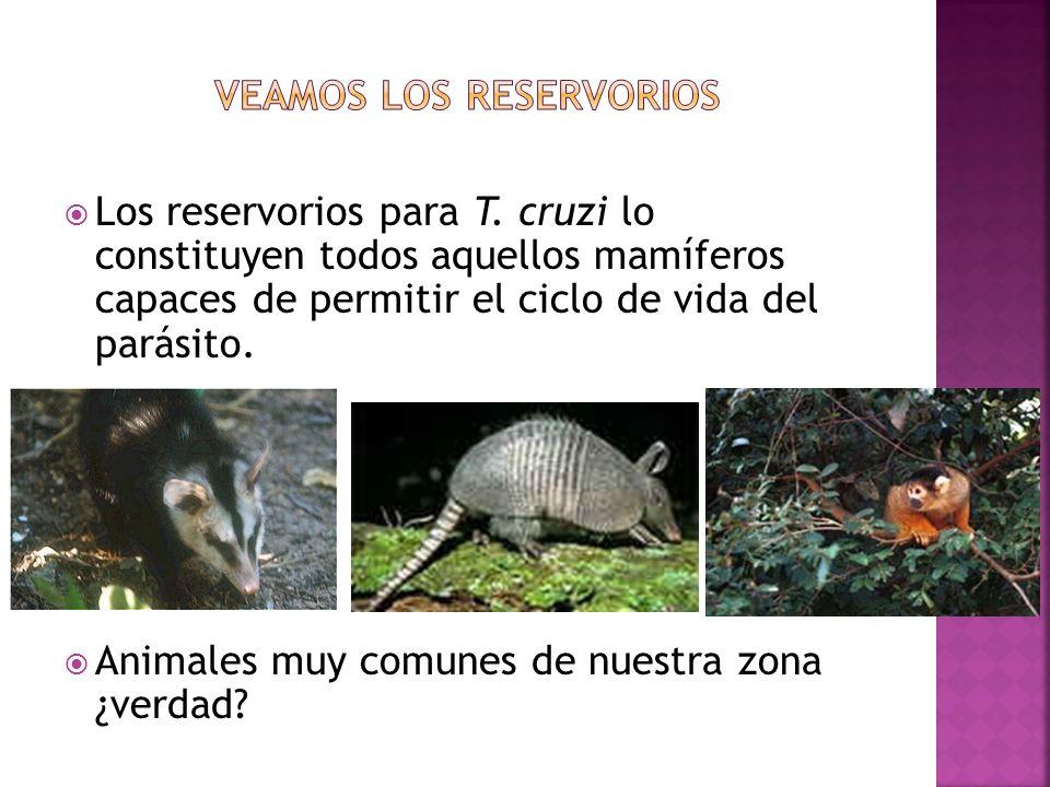 Veamos los reservorios