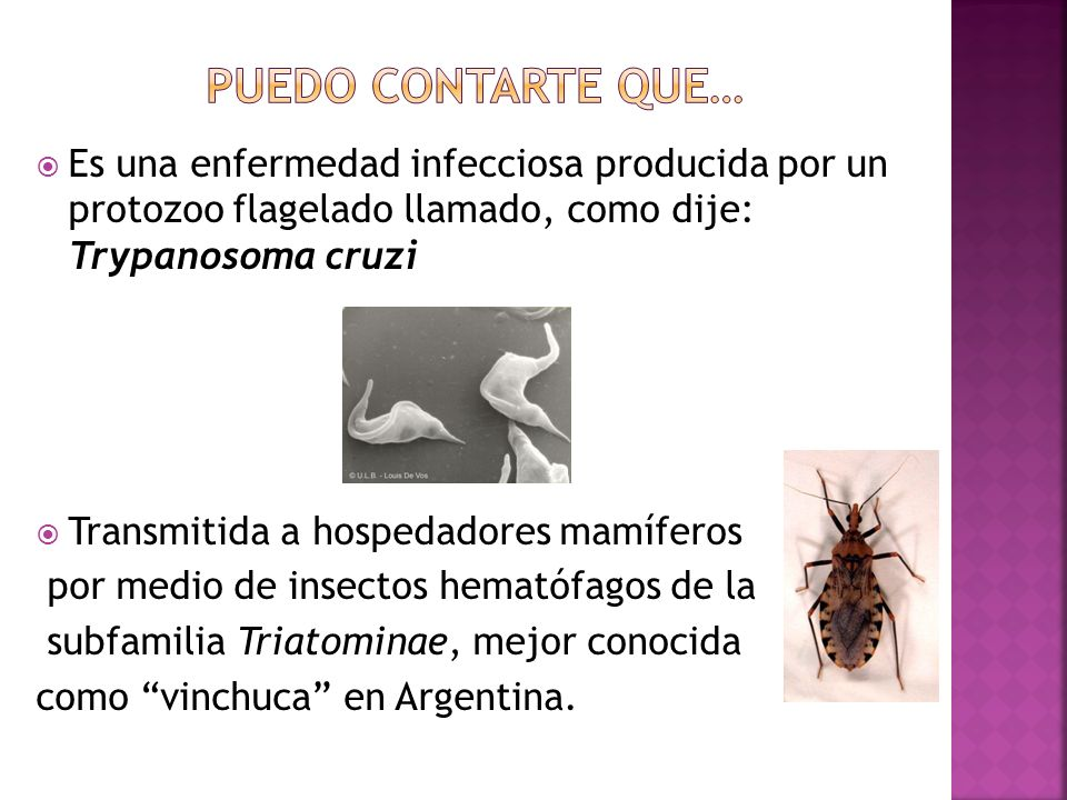 Puedo contarte que…Es una enfermedad infecciosa producida por un protozoo flagelado llamado, como dije: Trypanosoma cruzi.