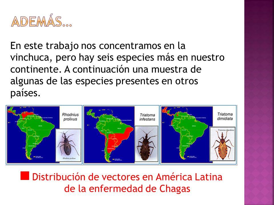 Distribución de vectores en América Latina de la enfermedad de Chagas