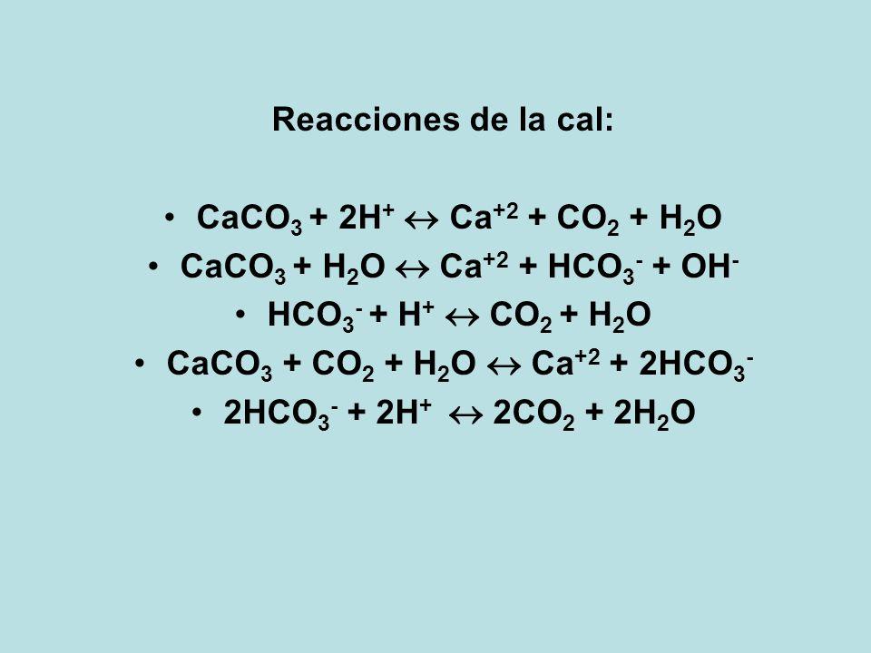 CaCO3 + H2O  Ca+2 + HCO3- + OH-