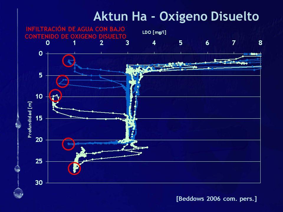 Aktun Ha - Oxigeno Disuelto