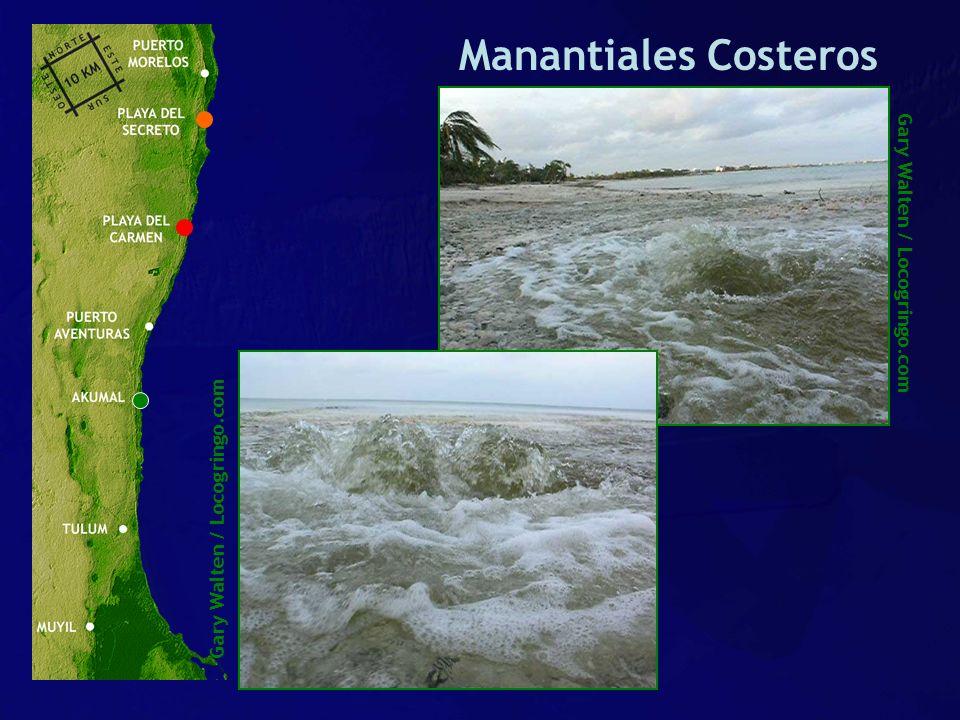 Manantiales Costeros Gary Walten / Locogringo.com