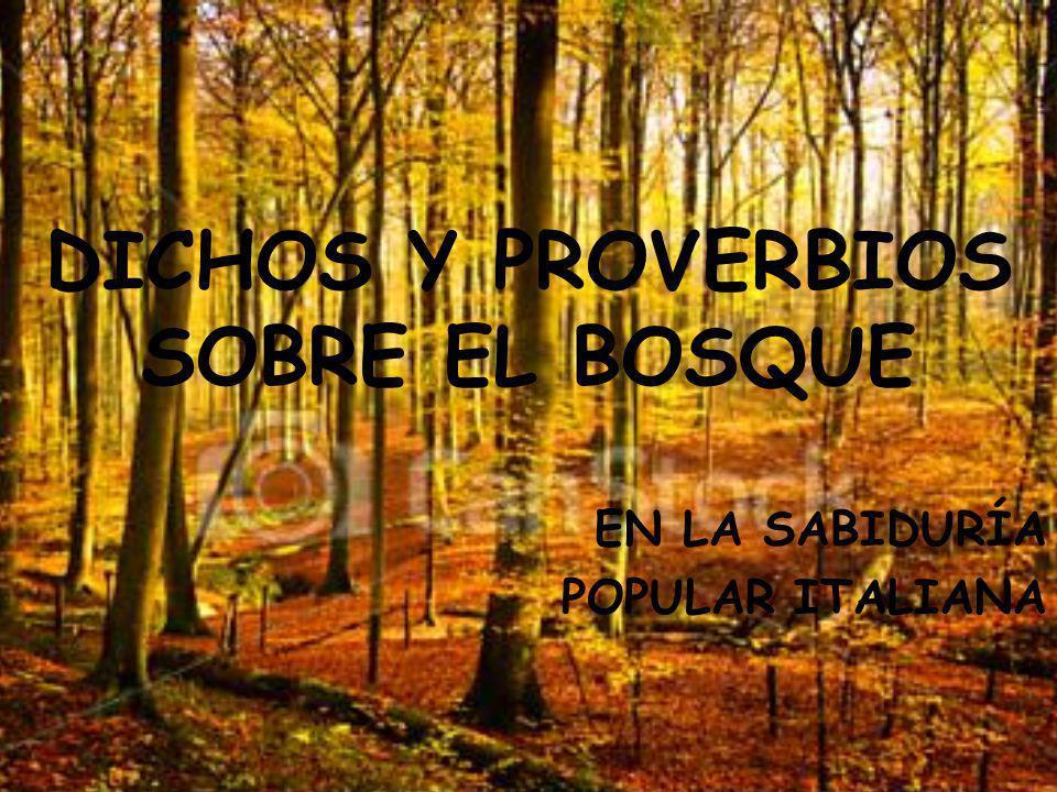 DICHOS Y PROVERBIOS SOBRE EL BOSQUE