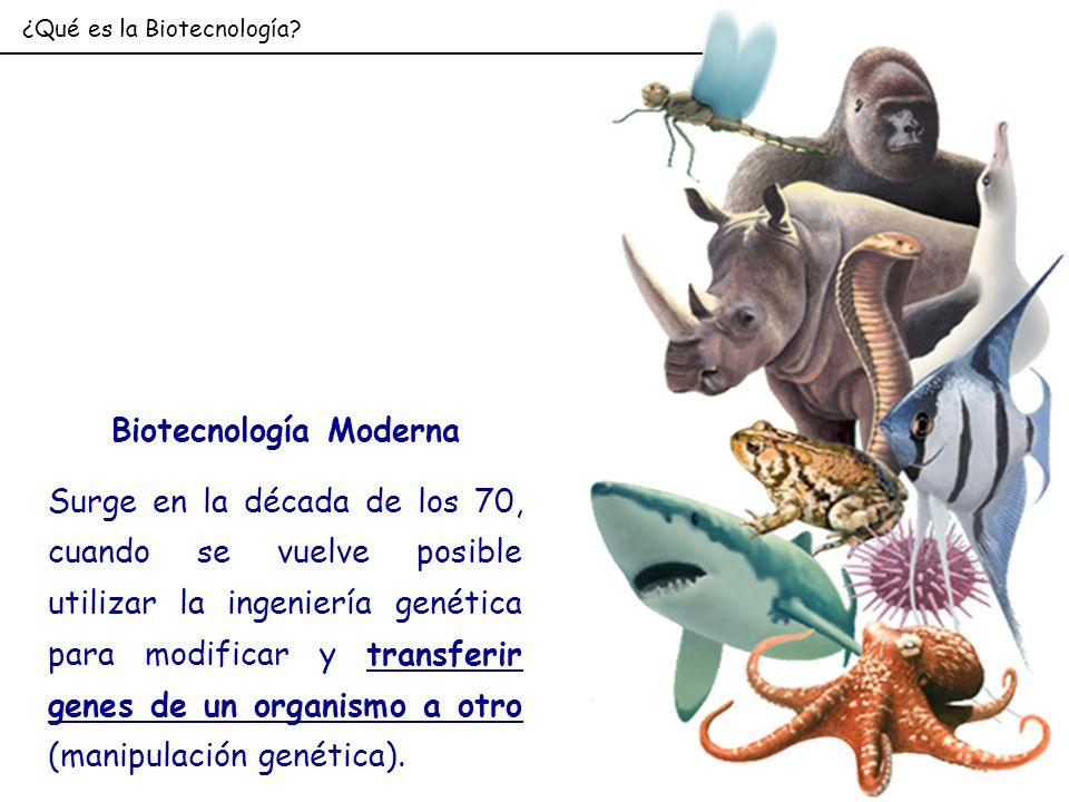 Biotecnología Moderna