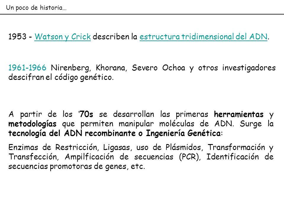 1953 - Watson y Crick describen la estructura tridimensional del ADN.