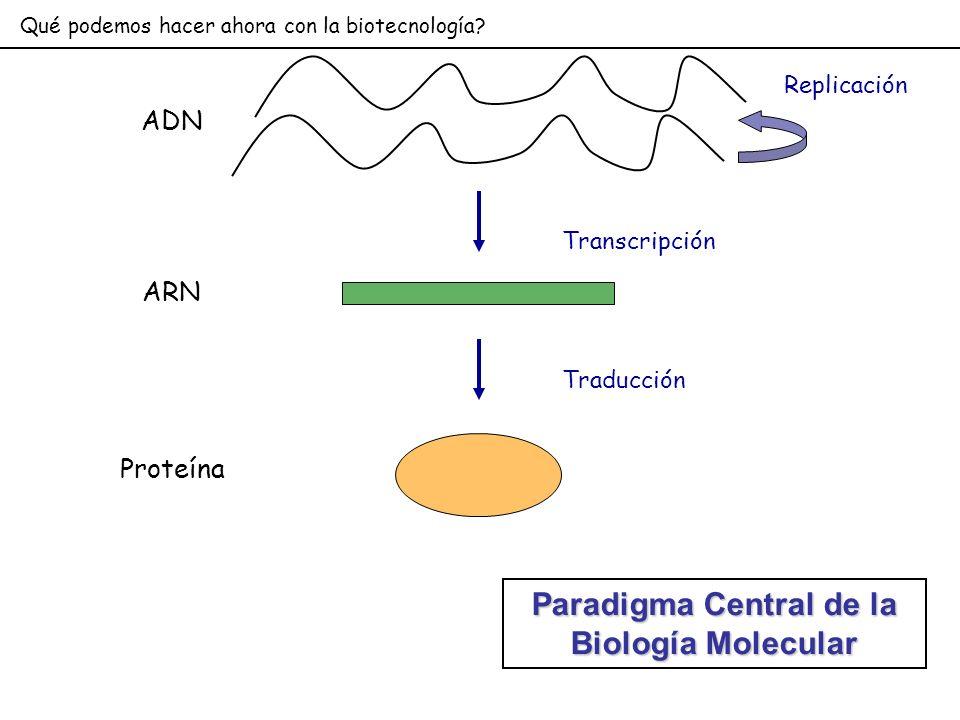Paradigma Central de la Biología Molecular