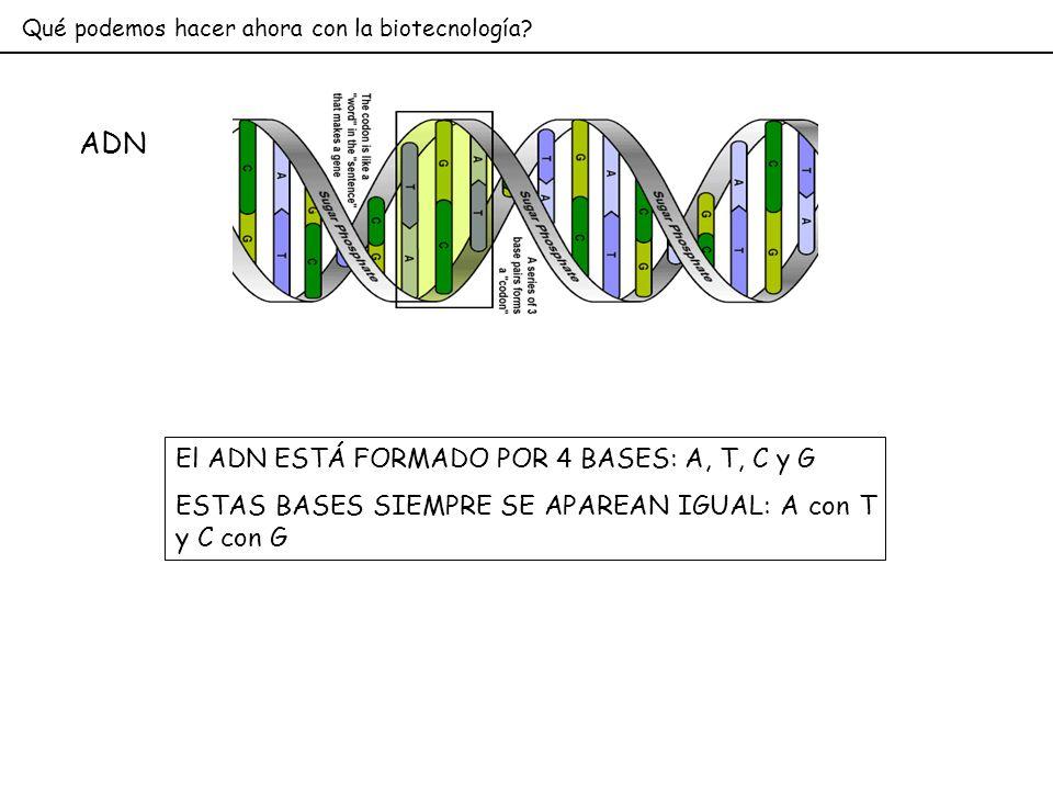 ADN El ADN ESTÁ FORMADO POR 4 BASES: A, T, C y G