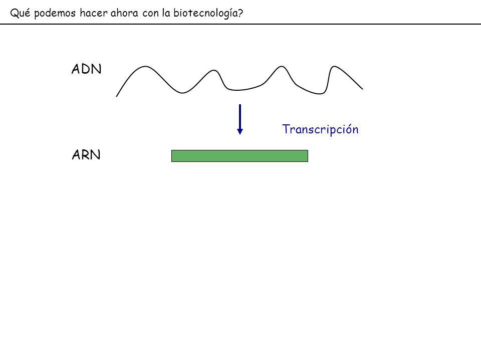 Qué podemos hacer ahora con la biotecnología