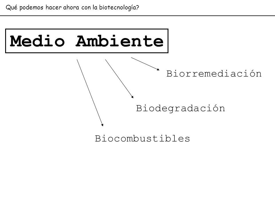 Medio Ambiente Biorremediación Biodegradación Biocombustibles