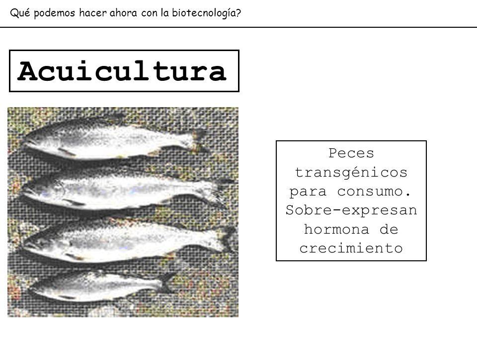 Peces transgénicos para consumo. Sobre-expresan hormona de crecimiento