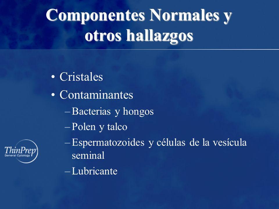 Componentes Normales y otros hallazgos
