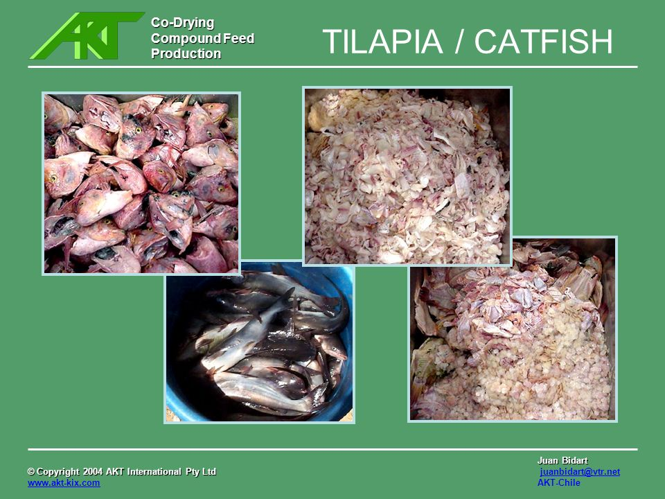 TILAPIA / CATFISH