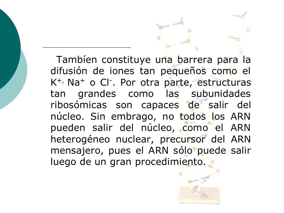 Tambíen constituye una barrera para la difusión de iones tan pequeños como el K+, Na+ o Cl-.